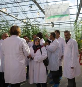 Sulaimani Polytechnic University (Holticulture Training) Tomato world